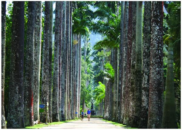 mini jardim botanico:Rio De Janeiro Botanical Garden
